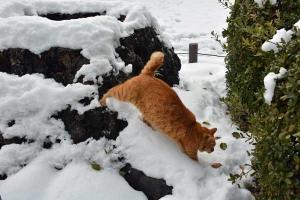雪猫 Snow Cat, Tokyo