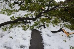 Snow Chaos, Tokyo