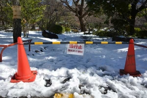 Snow in The Park, Tokyo