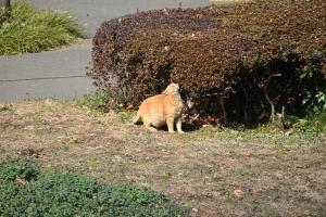 Park Cat, Tokyo