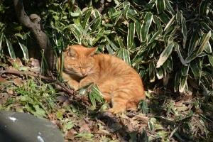 Tokyo Park Cat Sleeping