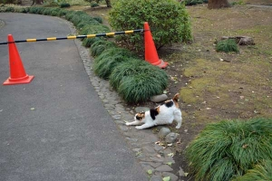 Tokyo Park Cat and Cone Bars