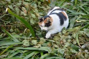 Tokyo Park Cat Sakura