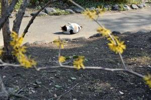 Tokyo Park Cat Sakura and Witch Hazel