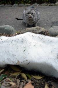 雪猫 Tokyo Park Cat and Snow