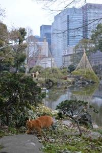 Tokyo Park Cat and Yukitsuri