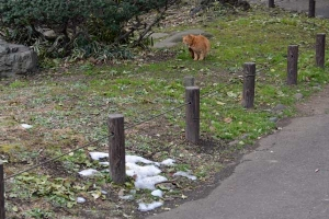 Tokyo Park Cat and Snow