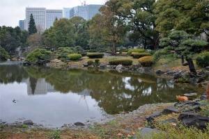 Tokyo Park Cat After The Rain