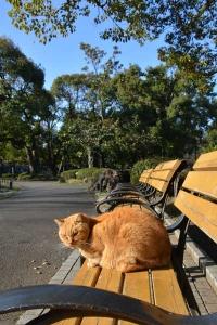 Tokyo Park Cat Under The Blue Sky