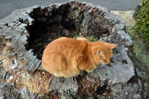 Tokyo Park Cat and Hollow Tree Stump