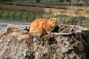 Tokyo Park Cat On The Tree Stump
