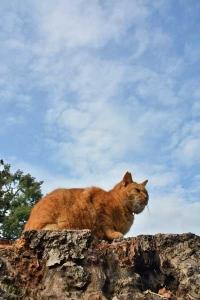 Tokyo Park Cat Against The Sky