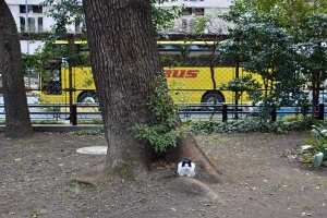 Tokyo Park Cat with a Yellow Thing