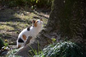 Tokyo Park Cat named Sakura in Spring