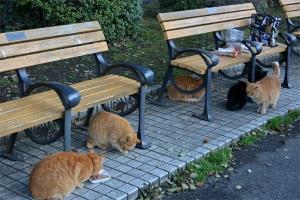 Tokyo Park Cats (Six Cats)
