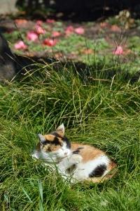 Tokyo Park Cat and Fallen Flowers