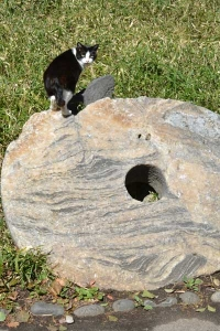 Tokyo Park Cat On The Stone Money of Yap Island