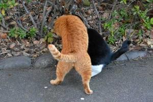 Tokyo Park Cats