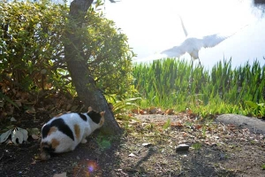 Tokyo Park Cat named Sakura and Egret