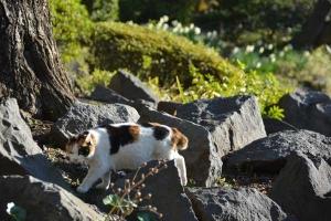 Tokyo Park Cat named Sakura