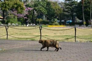 Tokyo Park Cat Walking