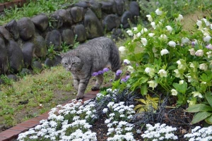 Tokyo Park Cat and Spring Flowers