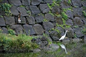 Tokyo Park Cat and Egret