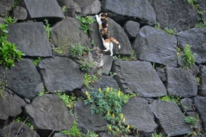 Tokyo Park Cat On The Wall
