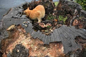 Tokyo Park Cat and Tree Stump