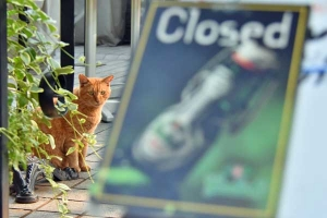Cat and We Are Closed sign