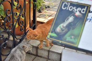Cats and We Are Closed sign