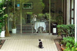 Cat Waiting For The Restaurant To Open