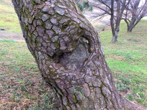松の木にハート