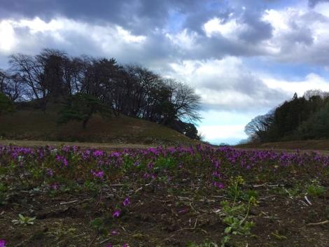 草花と松に囲まれた桜の名所