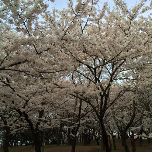 県立鳥屋野潟公園
