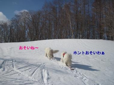 コピー (1) ~ IMG_7875