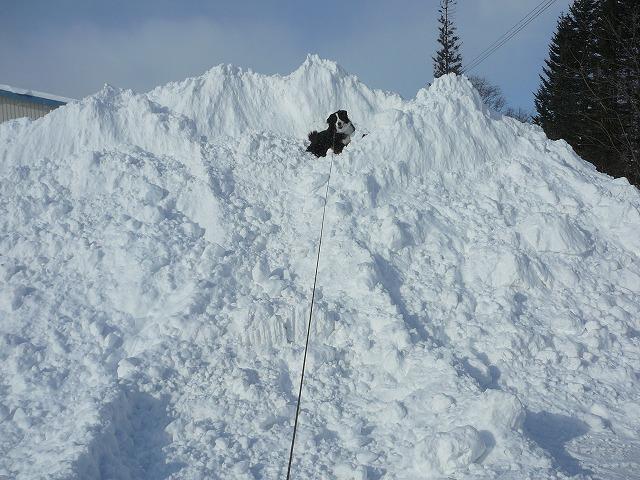 巨大雪山。ワンコは比較用です。