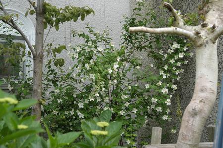 baikautsugi2015526-3.jpg
