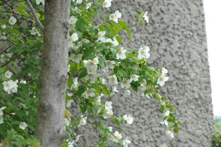 baikautsugi2015526-7.jpg