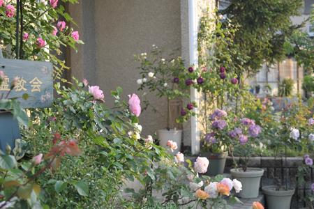 roses2015514-11a.jpg