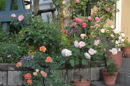 roses2015514-15a.jpg