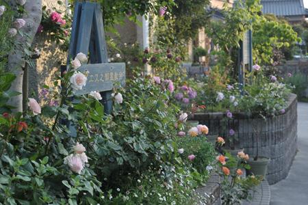 roses2015514-16a.jpg