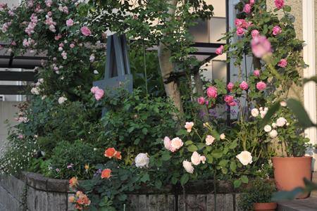 roses2015514-7a.jpg