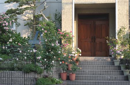 roses2015514-8a.jpg