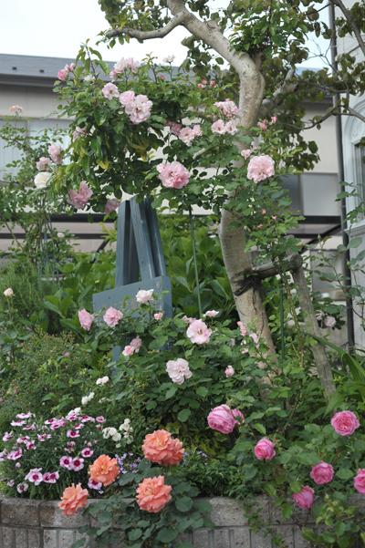 roses2015522-1.jpg