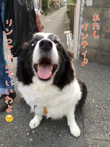 0765りんちゃん