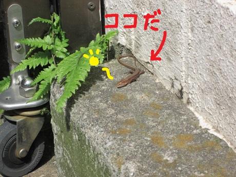 春来た10