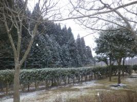大分県の雪