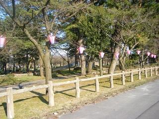 水族館桜 001