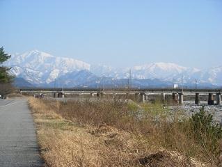 水族館桜 002
